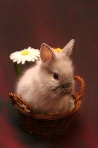 Salsango wünscht frohe Ostern - Wir wünschen allen Lesern ein frohes Osterfest - Foto: von Alexandra H. von pixelio.de