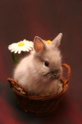 Salsango wünscht frohe Ostern
