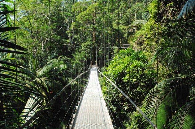IBES - Dschungelcamp Alle Könige und Kandidaten bisher im Dschungel-Camp