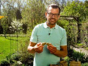 Natur im Garten 2017 Folge 1 - Karl Ploberger legt Kartoffeln