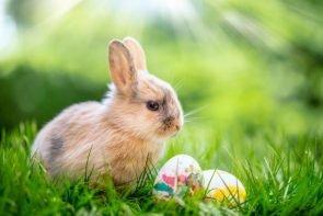Salsango-Osterhase wünscht frohe Ostern