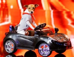 Supertalent 2017 am 16.9.2017 Alle Kandidaten, die Show beginnt! Kandidat Hund Pepsi
