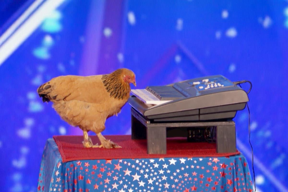 Das Huhn, das Klavier spielt beim Supertalent am 13.6.2020