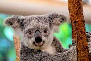 IBES-Dschungel-Show 2021 Statistik Einschaltquoten, Etappen, Ergebnisse